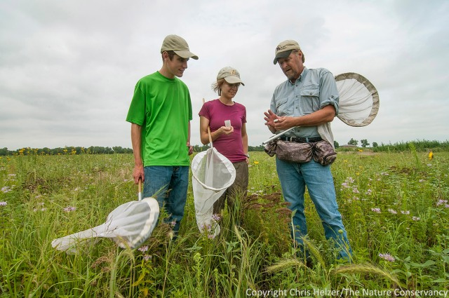 Studying the way native bees are responding to our restoration work has been a major focus over the last several years.