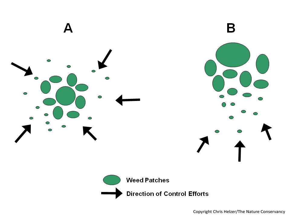 Invasive Species Control Strategies Avoiding The Whac A Mole