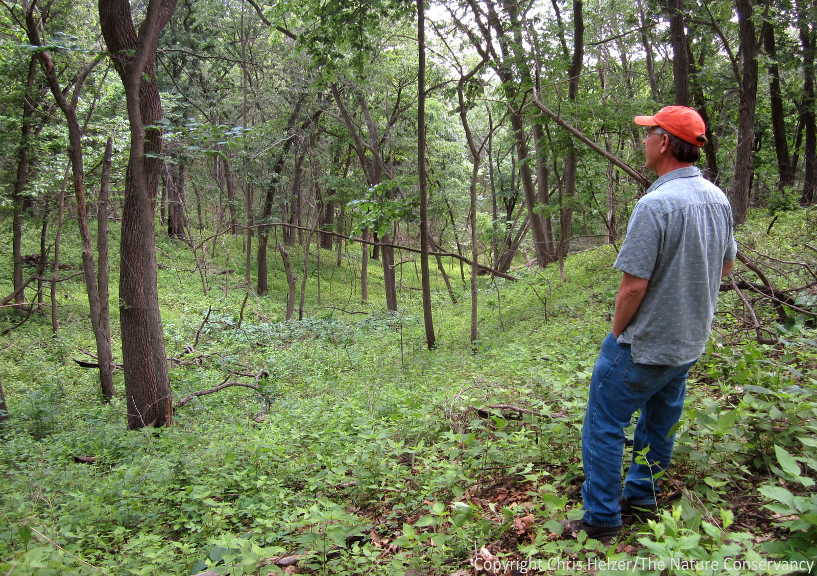 saving nebraska s oak woodlands by burning them the prairie gerry steinauer stands in an area of woodland that has been treated with frequent fire as well as some hack and squirt herbicide treatments to help kill