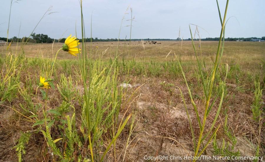 Prairies look pretty dry this year.