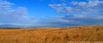 A landscape view of the sandhills in December