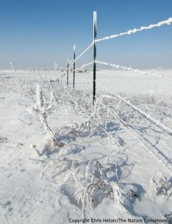 Frost and snow on prairie and fence.