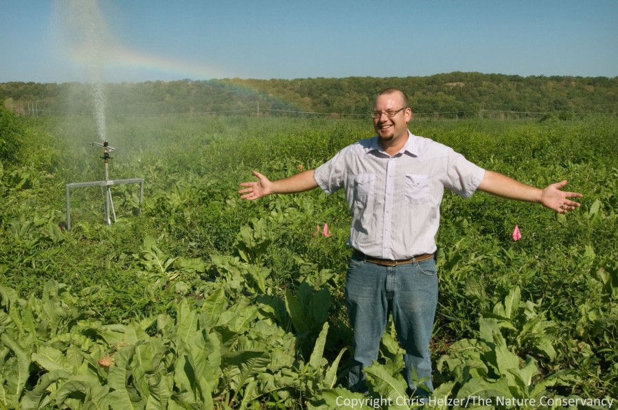 Tyler Janke stands in front of his irrigated plots where he is restoring cottonwood woodland along the Platte River.