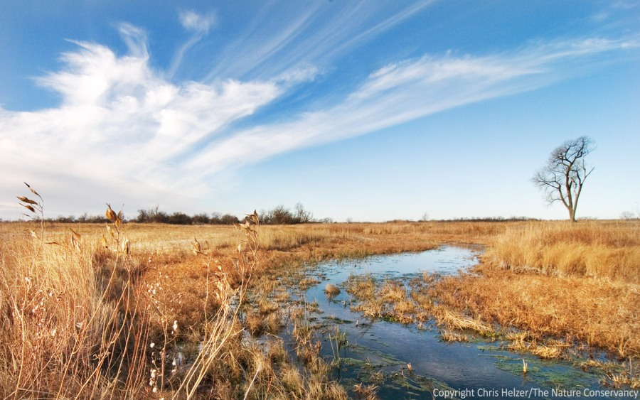 A restored wetland and stream along the Central Platte River.