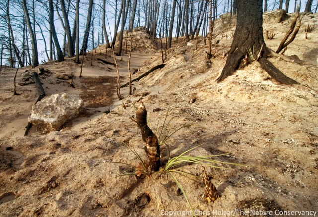 Soil erosion will probably be an issue on steep slopes and under formerly dense stands of trees.