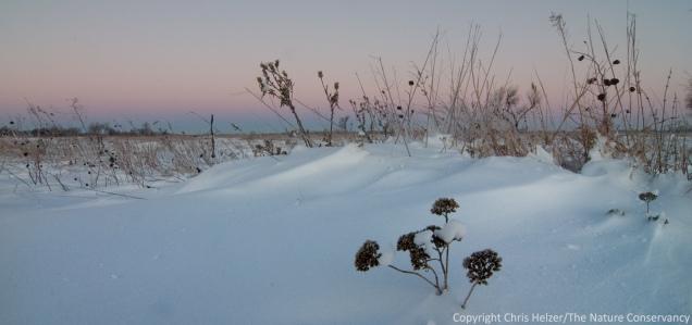 Snowy prairie in the pre-dawn light.  The Nature Conservancy's Platte River Prairies, Nebraska.