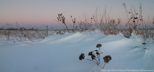 Snowy prairie in the pre-dawn light.  The Nature Conservancy's Platte River Prairies, Nebraska.