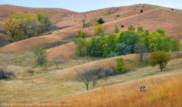 Conservation photography can be a lonely profession, but plays a critical role in conservation.  Ty Smedes at The Nature Conservancy's Broken Kettle Grasslands - Northwest Iowa.