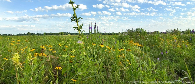 Plant diversity and buttterfly habitat were the objectives of our 5-year project.