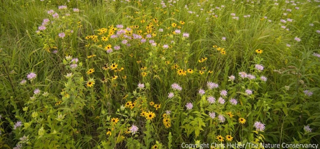 Wildflowers or weeds?