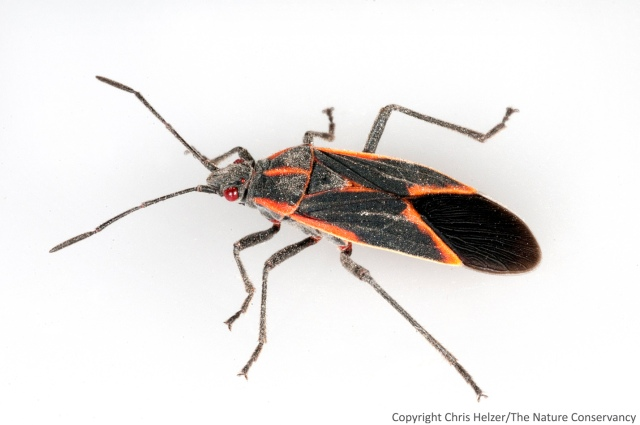 Black And Red Beetles In Your Kitchen