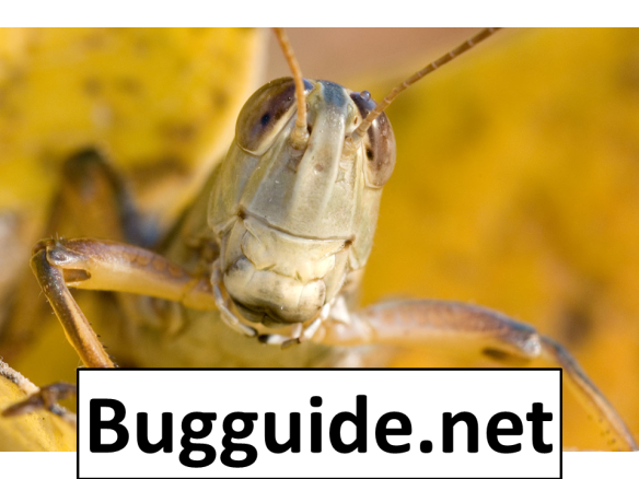 We need to create more opportunities to learn both insects and plants.  More importantly, we need to convince people that plants and invertebrates are interesting enough to care about. There are resources like bugguide that can help amateurs like us identify insects, but they only work if we use them.