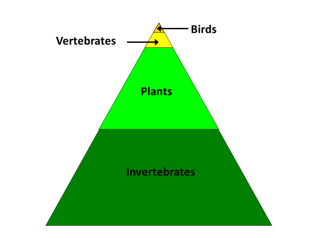 In grasslands, the vast majority of species are plants and invertebrates.  Birds and other vertebrates make up a very small proportion of those species.