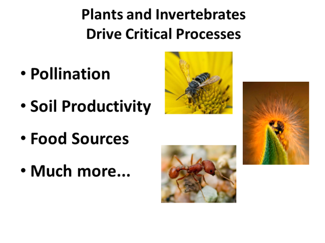 Between them, plants and invertebrates drive the ecological function of prairies (including pollination and soil productivity, and they are the food sources for most creatures).   In other words, they're what make grasslands tick.