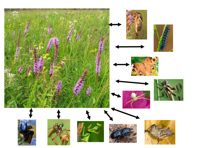 The diversity of plants influences the diversity of invertebrates, and vice versa.  That complexity is the foundation of the resilience and overall stability of the ecosystem.  It's critically important to maintain plant and invertebrate diversity because without it, the ecosystem breaks down.