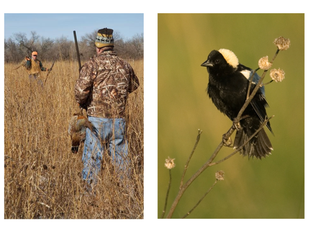Wrong.  We actually  focus mostly on birds.  Birds we shoot and birds we watch.  I really like birds, but they're not good indicators of how plant and invertebrate communities are doing, so they don't tell us much about prairie function.  Birds are an important part of conservation, but they're only a small piece – we need to be sure our focus on them doesn't distract us from the broader ecosystems they live in.