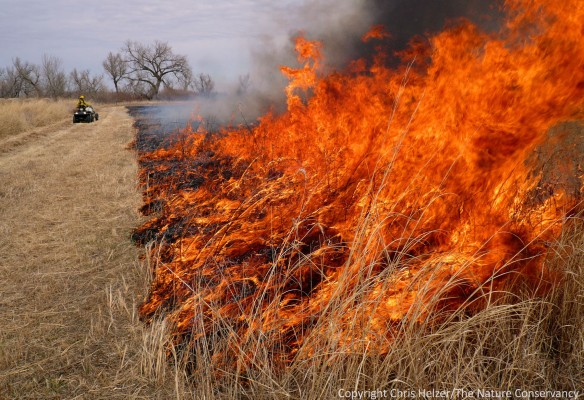 Whether or not to burn in a drought year can be a tough decision to make.