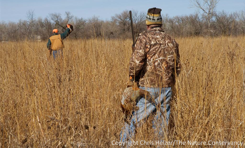 Hd Pheasant Hunting 4k Picture For Gadgets. Turkey Wallpaper 4
