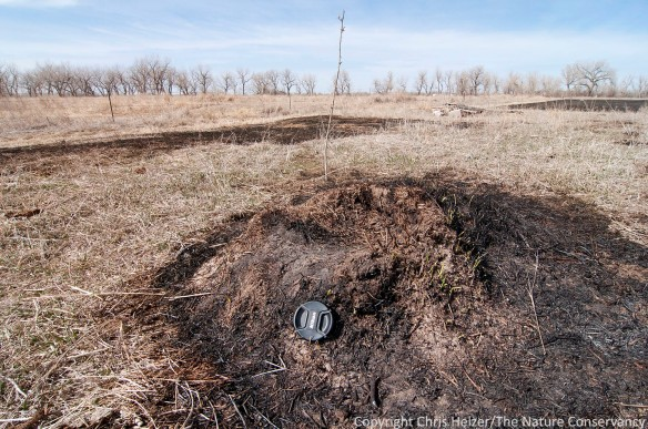 Here's the mound, with a 72mm lens cap for scale.