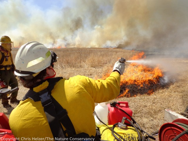 Controlling the backing fire on one end of a prescribed burn, with the flames of the headfire in the background.  The Nature Conservancy's Platte River Prairies, Nebraska.