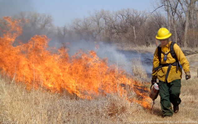 Big flames from tall grass.