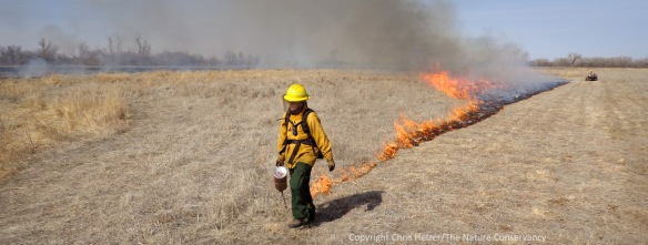 Mardell Jasnowski lights the headfire near the end of yesterday's prescribed burn in a 2001 prairie restoration.   The Nature Conservancy's Platte River Prairies, Nebraska.