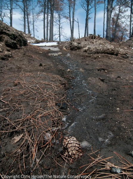 A rivulet of water runs out of melting snow.