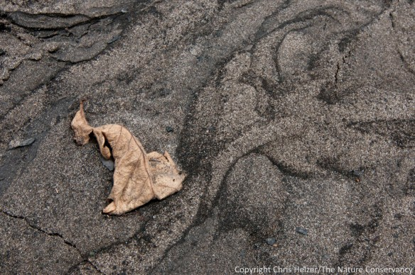A bur oak leaf lies in a pattern of sand and ash.