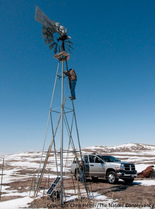 "The ""windmill cam"" will capture a wide view of bison-grazed sandhill prairie as it greens up this spring, but will also follow it over the next several years, as dynamic patterns of bison grazing, weather, and prescribed fires shape its habitat structure and species composition."