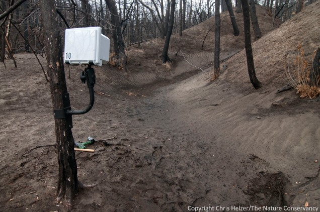 This camera is set up to record any sediment that pools up at the base of the (formerly) pine-covered ridge north of the river.  In addition, it will record the resprouting of several oak trees growing within the frame.