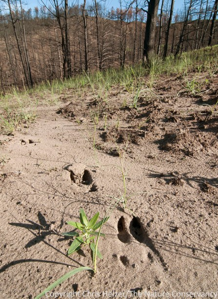 For better or worse, deer tracks were common.