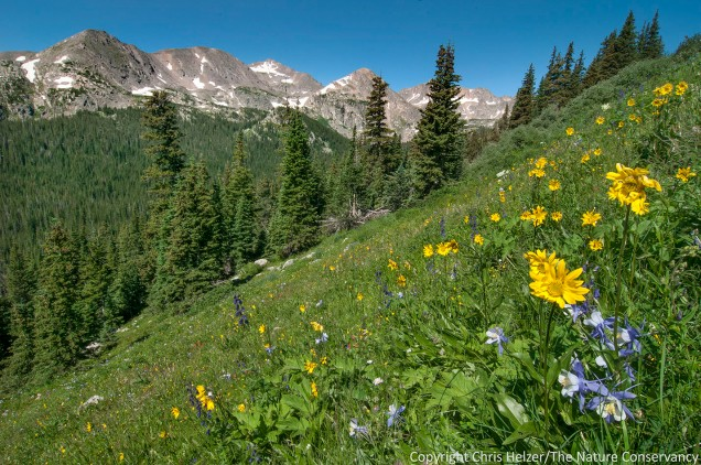 After a day of short hiking to acclimate to the altitude, we took a longer hike on the Arapaho Pass trail near Nederland, Colorado.  The wildflowers in the meadows were fantastic, and made a prairie ecologist feel at home.