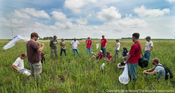 At our pollinator workshop on Tuesday, we spent time talking about prairie restoration and management strategies, as well as general pollinator ecology.