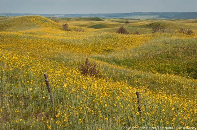 Some people will look at this photo and see an amazing abundance of pretty wildflowers.  Others will see weeds running amuck.