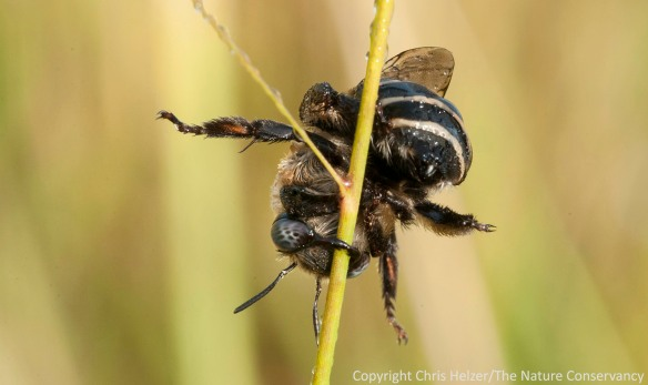 Another view of the same bee.