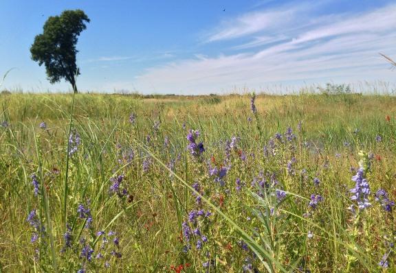 Derr Sandpit Wetland Restoration - The Nature Conservancy's Platte River Prairies, Nebraska.