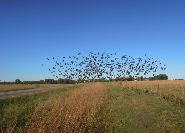 But that was apparently the last straw for the birds and they flew away toward the river.
