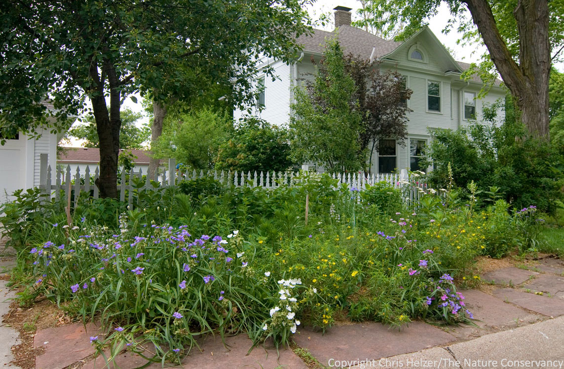 The Conservation Value Of Backyard Prairies The Prairie Ecologist