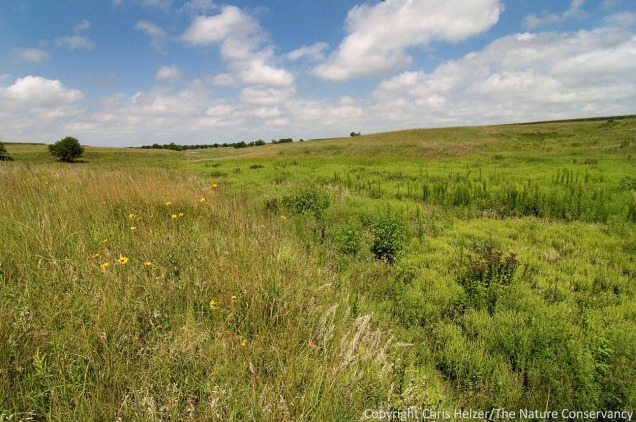 While there are a few places that were left unfarmed (foreground), much of the prairie is of low plant diversity, and the draws are dominated mainly by smooth brome.