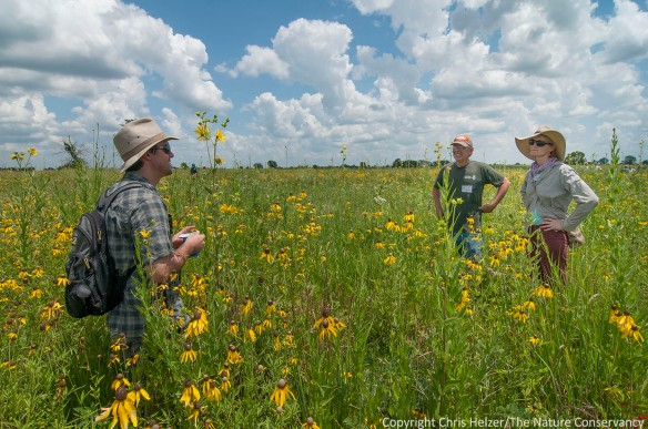 Informal discussion time, whether in the field or indoors, is often the most valuable part of any conference.  This conversation - during the 2013 Grassland Restoration Network - occurred during some free time on a field trip.