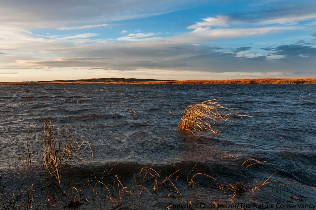 Even on this relatively small wetland, the wind was strong enough to whip up some pretty big waves.