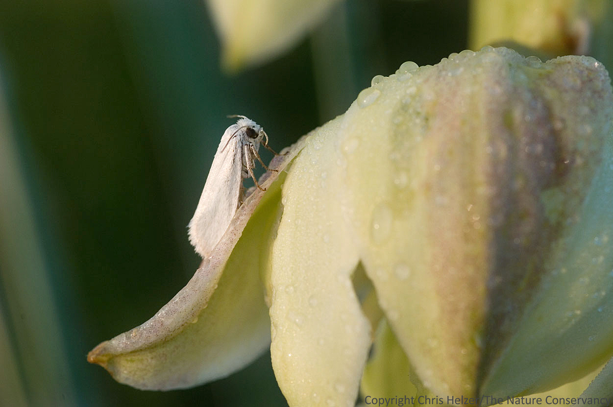 yucca flower and moth relationship quizzes