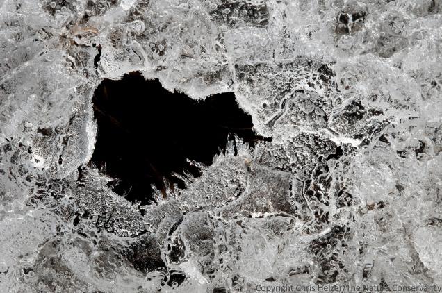 Patterns in ice.  Helzer prairie pond, near Stockham, Nebraska.
