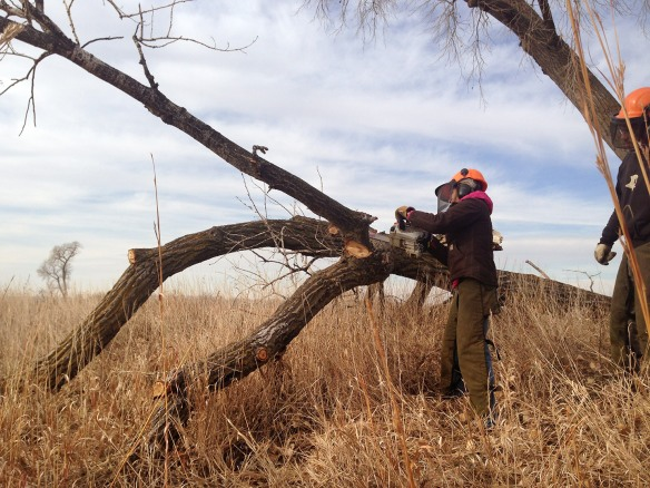 Anne cuts off a limb (of a tree!), supervised by Nelson Winkel, TNC land steward.