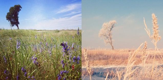 Sand pit restoration: summer vs. winter.