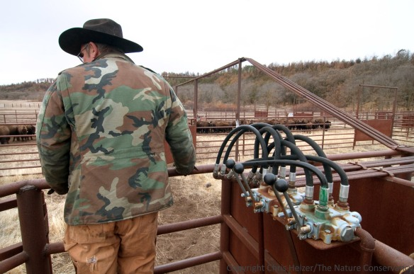 Conservancy employee Doug Kuhre runs the hydraulic-operated gates at a bison sorting corral at the Niobrara Valley Preserve.