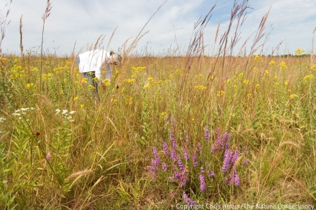 Come harvest prairie seeds with us, or help with other prairie restoration or management work.