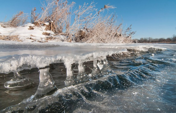Columns of ice along a patch of open water on the Platte River.  Hamilton County, Nebraska.