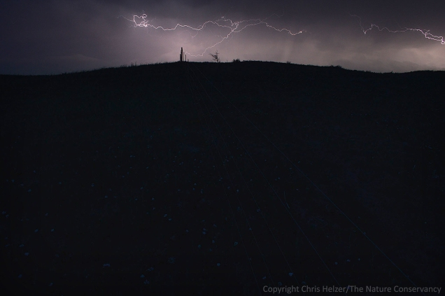 Lightning during the night on June 21, 2013.  Wild rose flowers can be seen in the glow of the lightning.