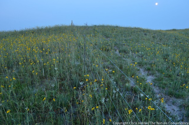 Moonlit prairie on the same day as the above photo - August 19, 2013